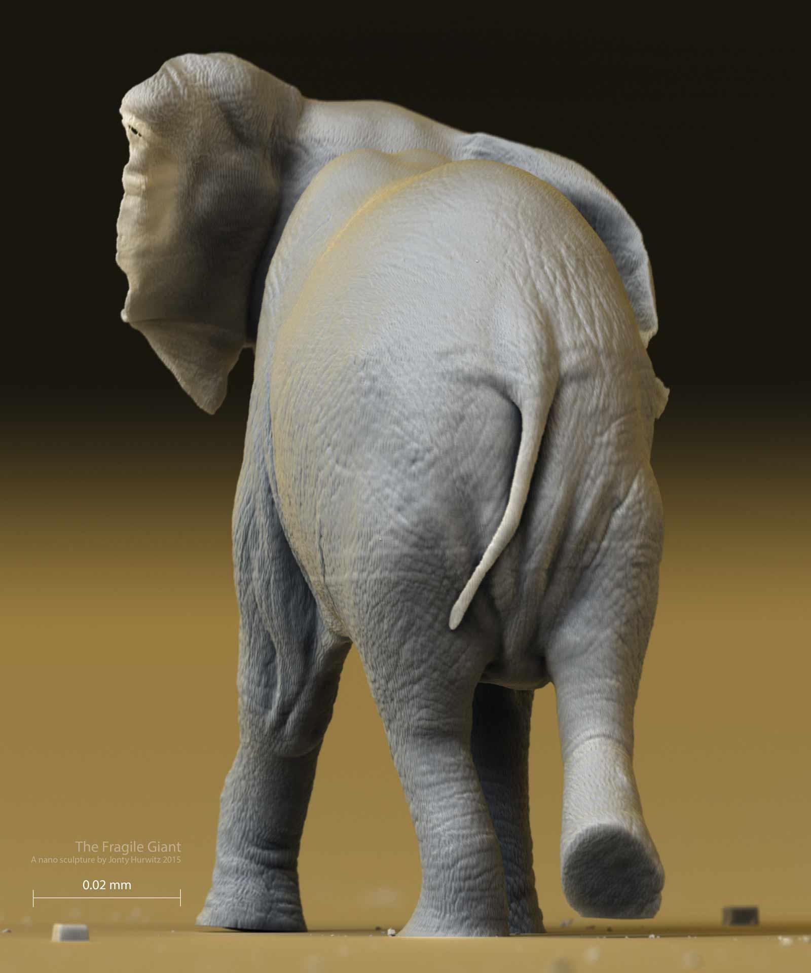 elephant_0206_4k_4-(1).jpg