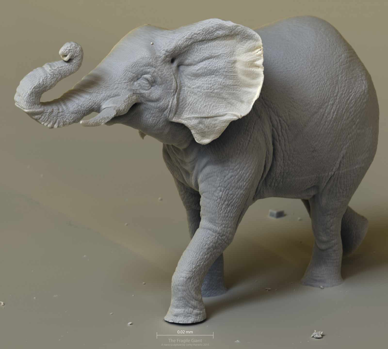 elephant_0206_6k_1.jpg