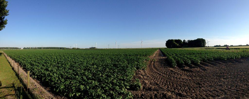 Farm land in Bergen op Zoom
