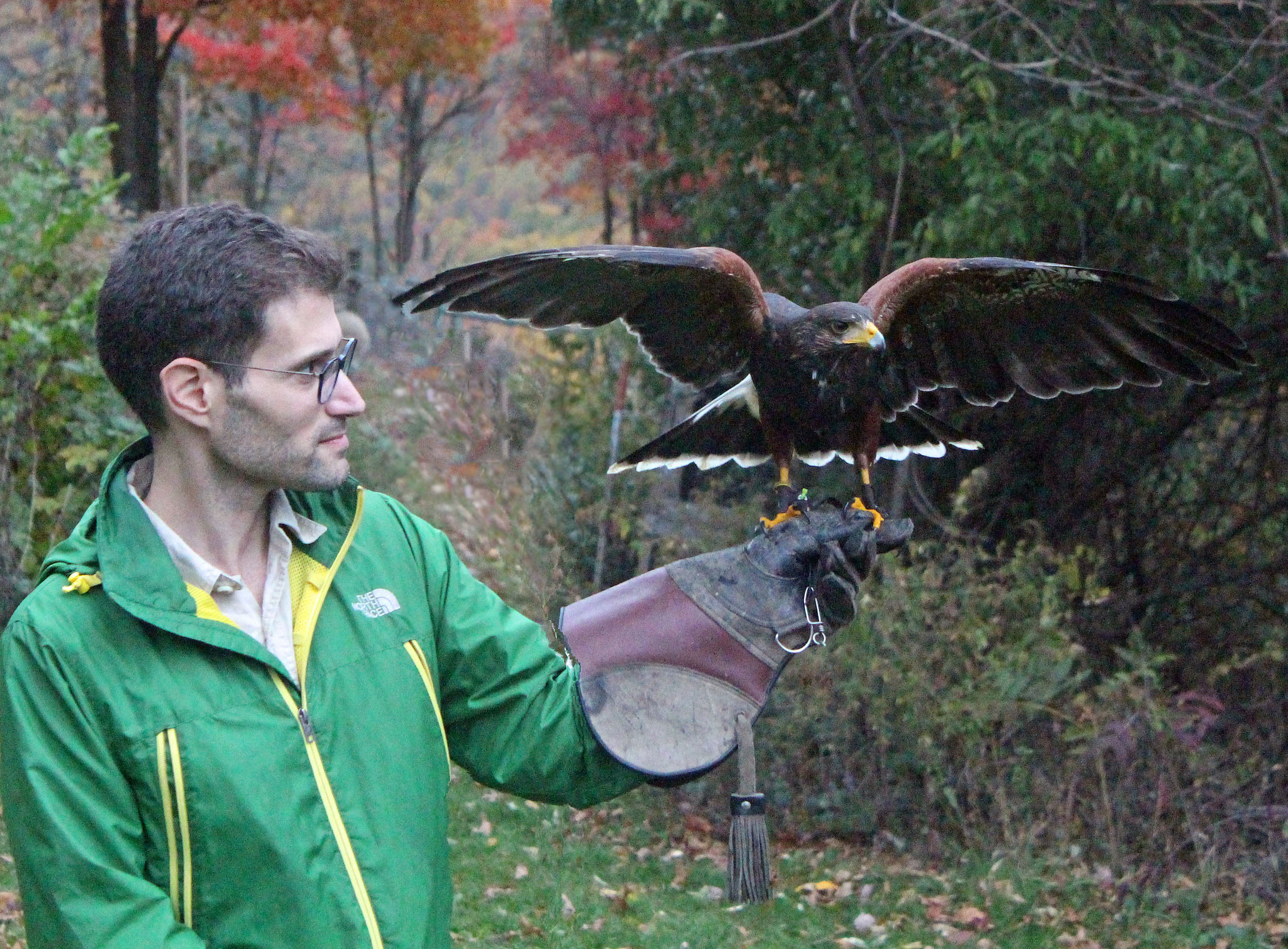 Just practicing with my Harris Hawk pal JJ, with help from Master Falconer Mike Dupuy: http://mikedupuyfalconry.com/