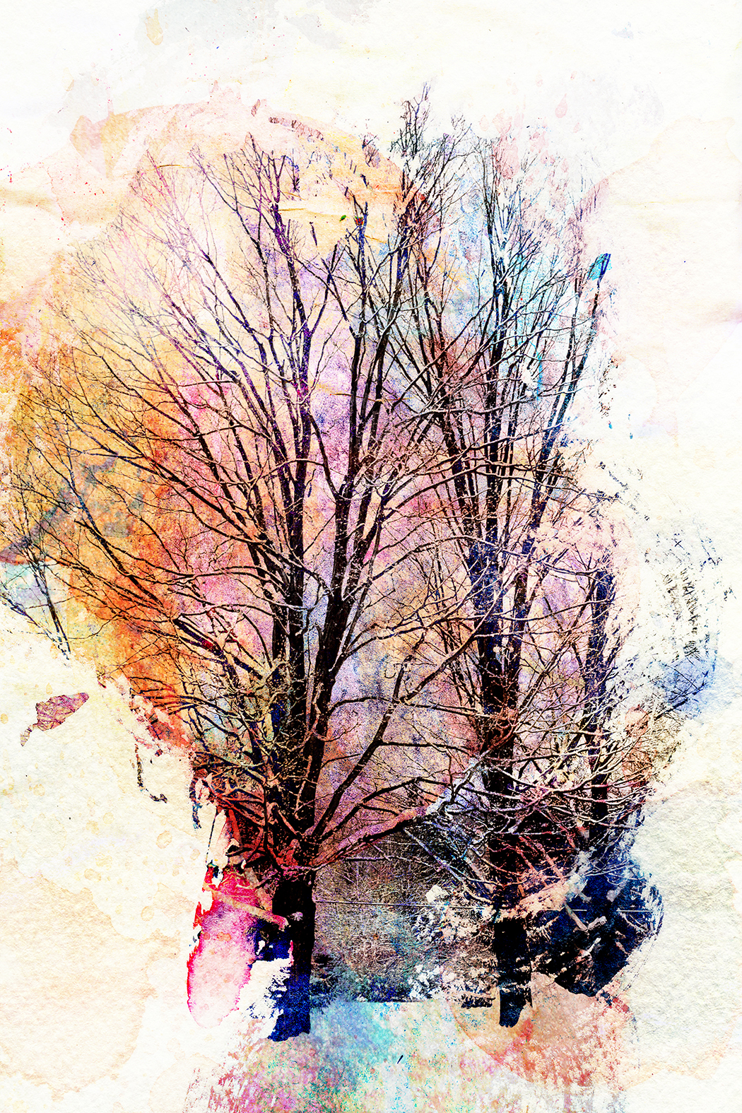 Winter Trees, 2011 | 11x14 | $75