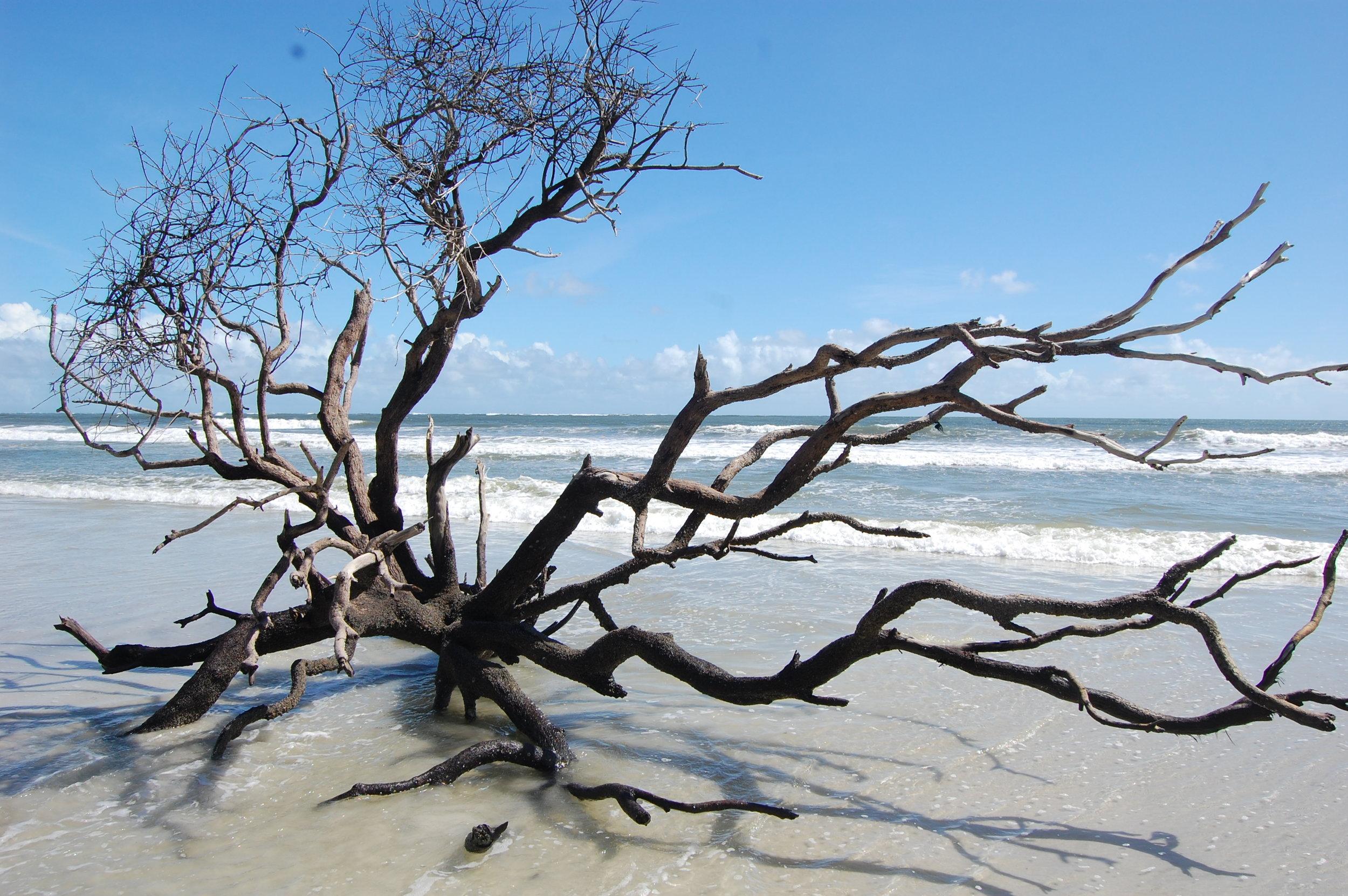 Little Talbot Island, FL