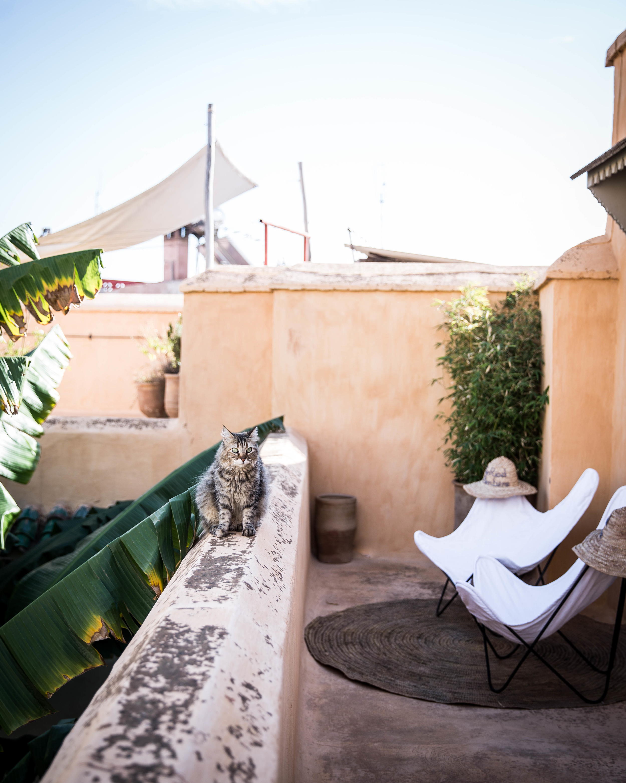marrakech terrace.jpg