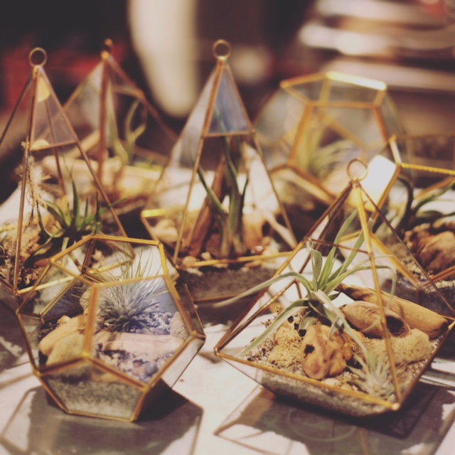 TERRARIUMS ARE AVAILABLE IN MANY SHAPES AND STYLES FOR ANY EVENT THEME