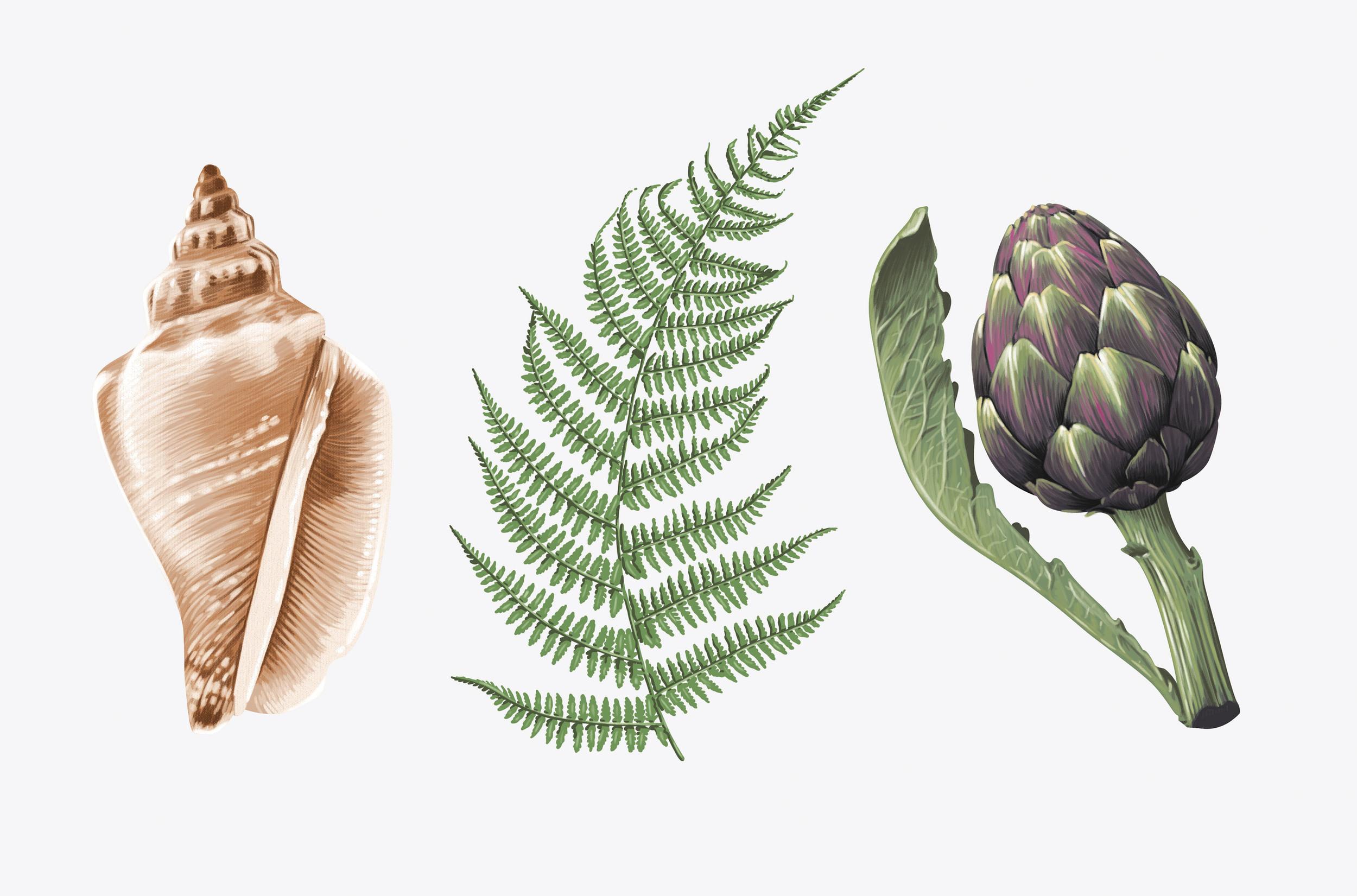 02. Botanicals2.jpg