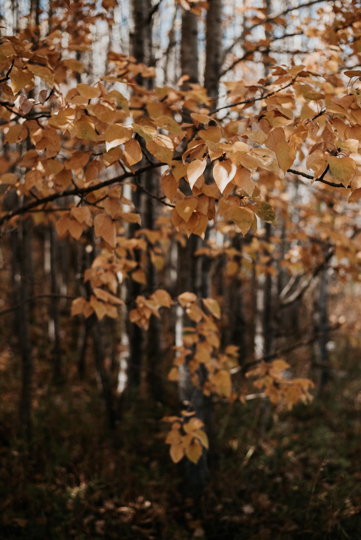 171005-115035-October-a1-1555.jpg