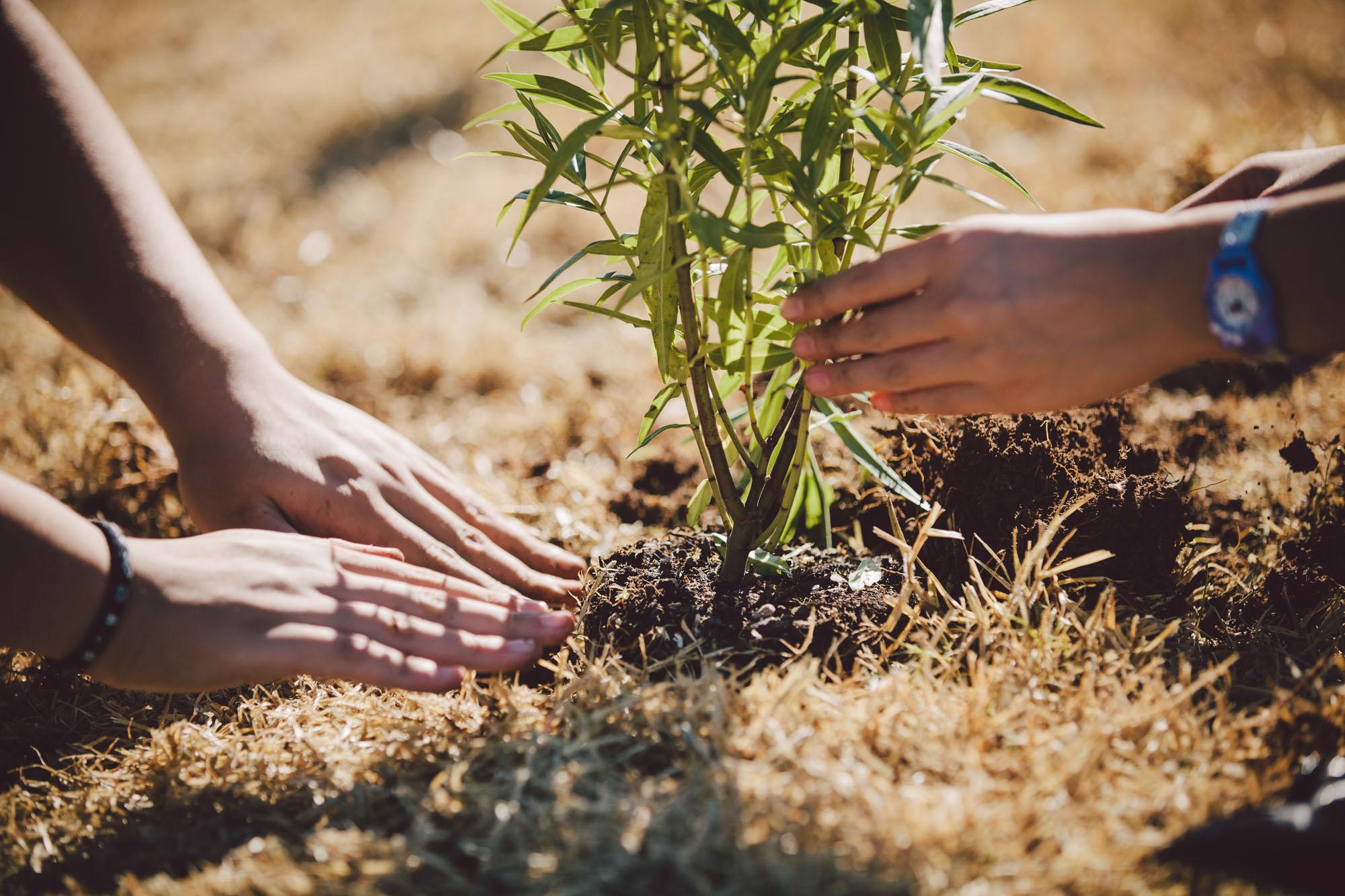 SCL-Tree-planting-178.jpg