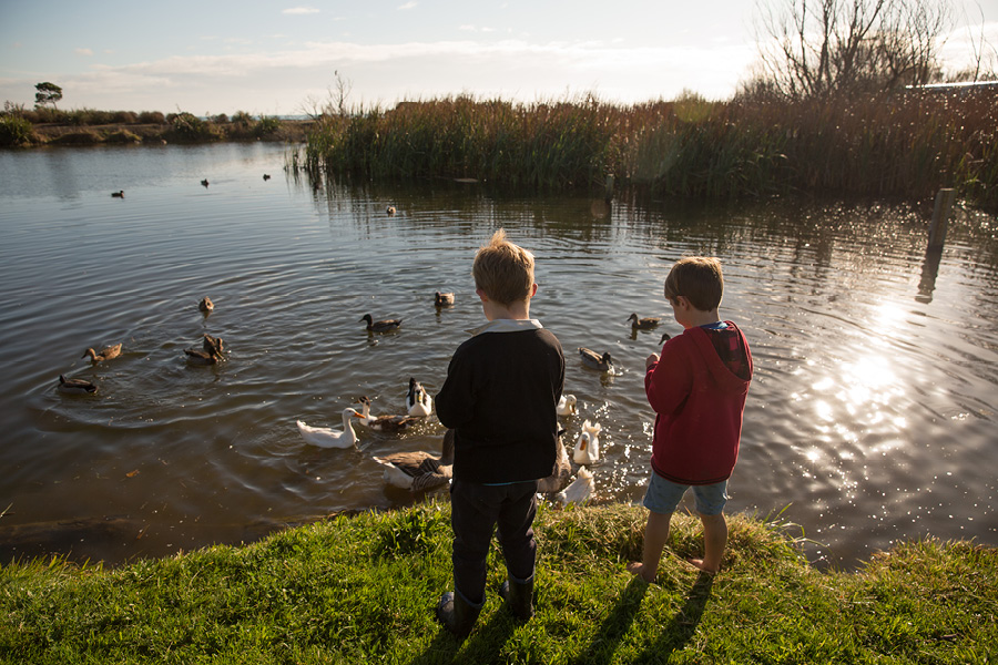 Otis and Teddy feed the ducks. Photo credit Richard Brimer