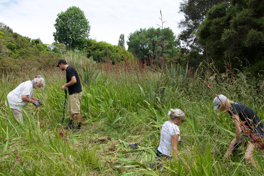 International Volunteers Pam, Chris, Terry and Carolyn remove weeds from whitebait habitat in Auckland's upper Waitemata Harbour.