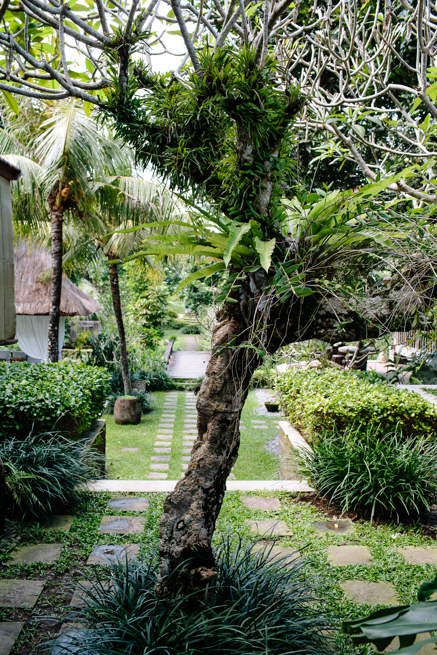 Bali-Kalapa-2016-5010.jpg