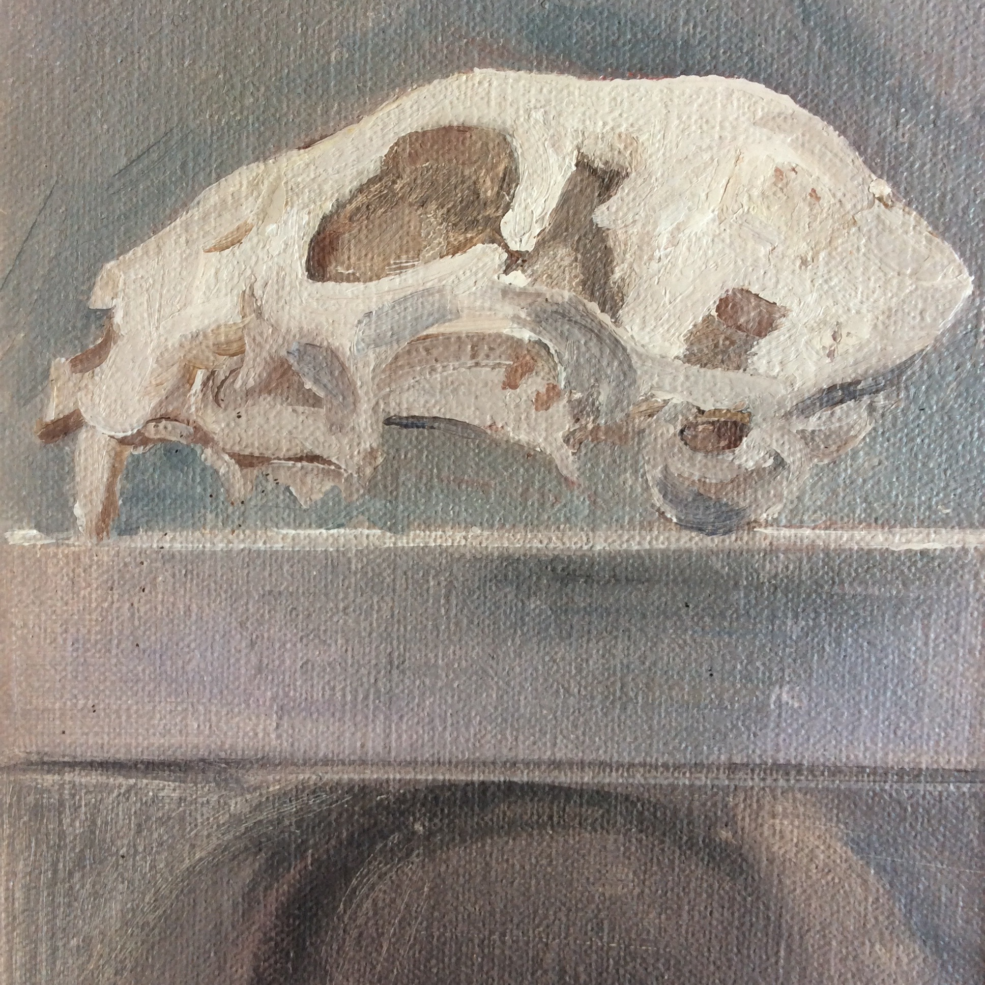 Cat skull - (detail)oil on canvas      2014