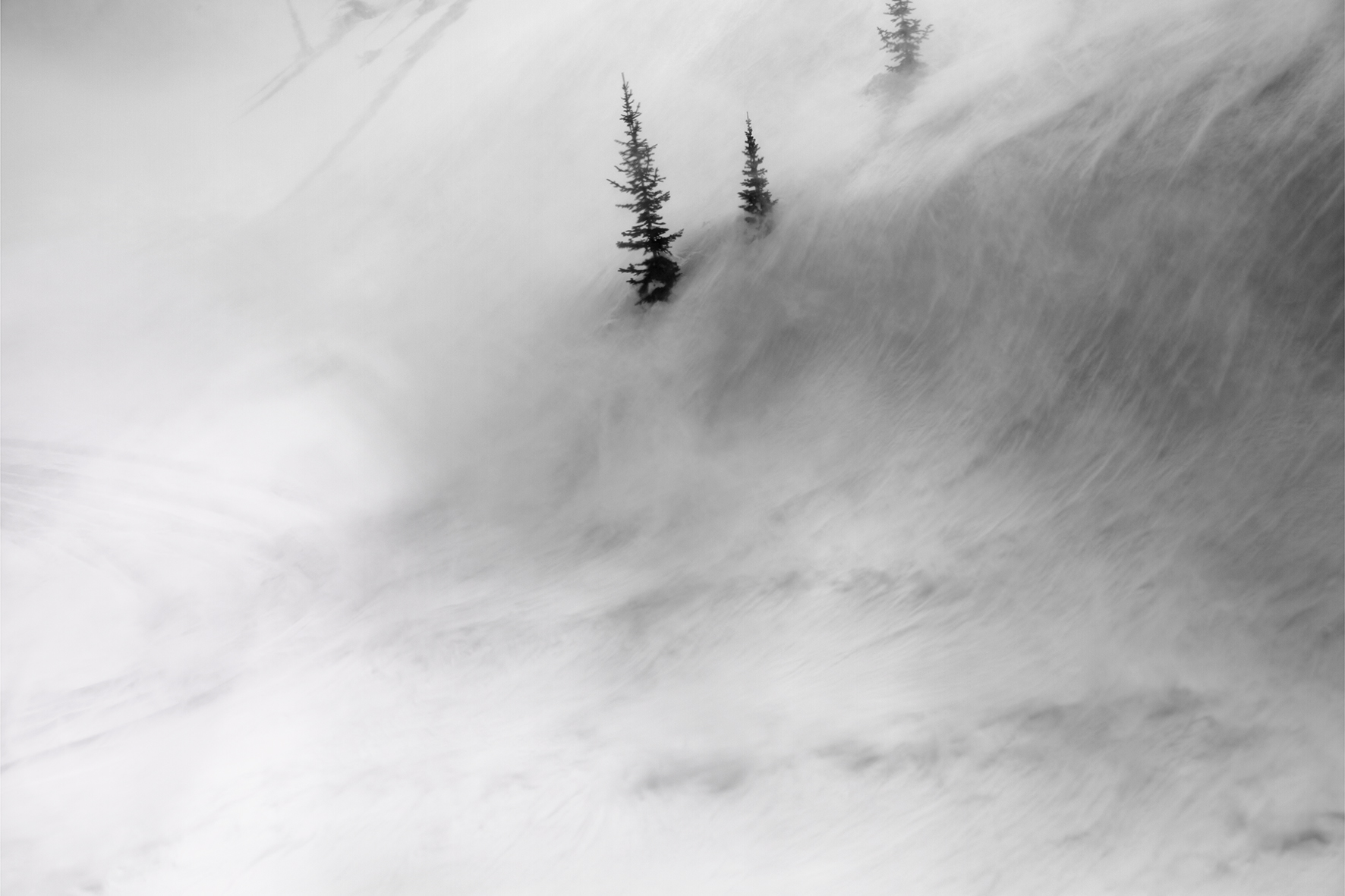 Trees in Wind (series: Articulate Silence), 2012