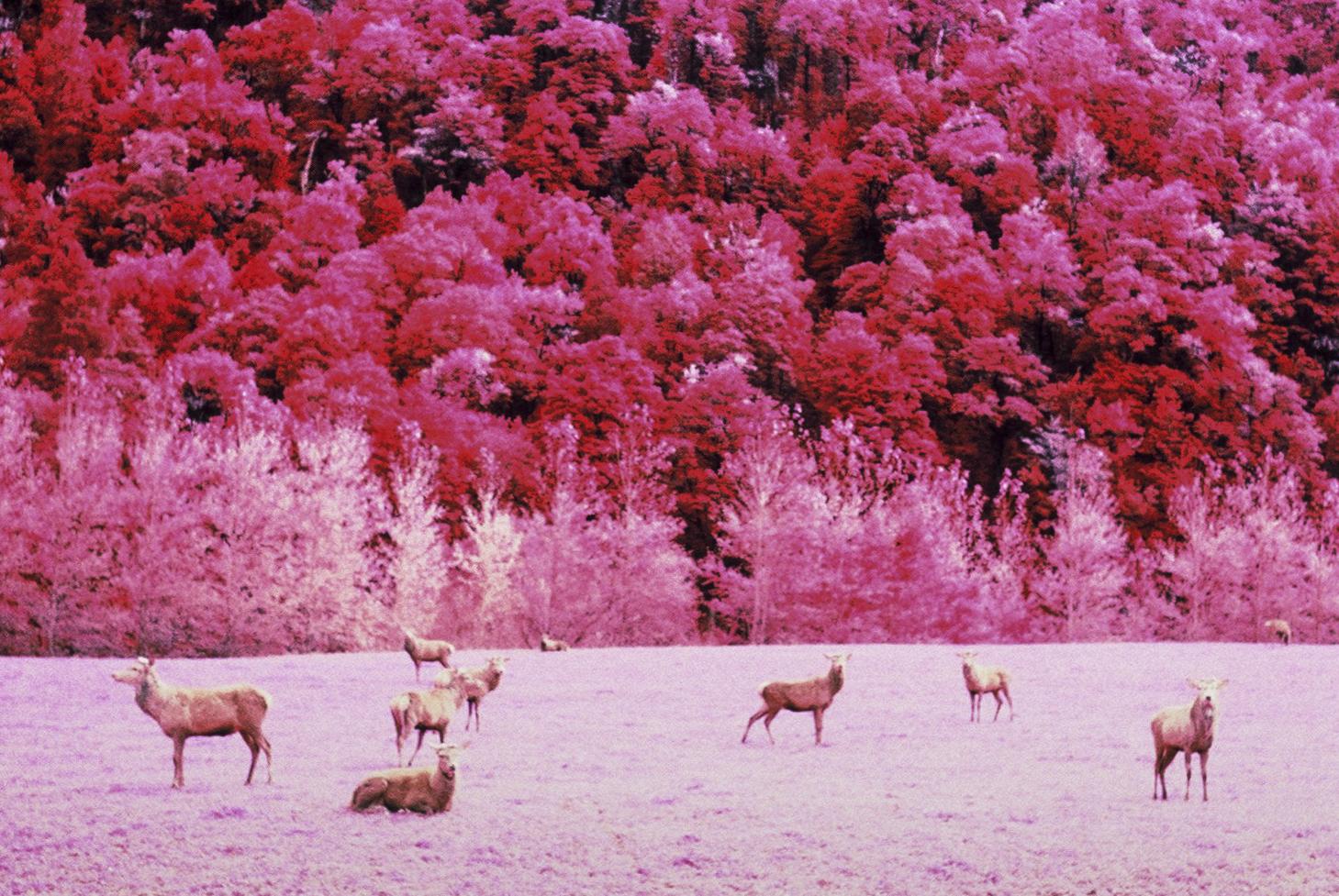 Infrared-New-Zealand-Kasia-Sykus-4.jpg