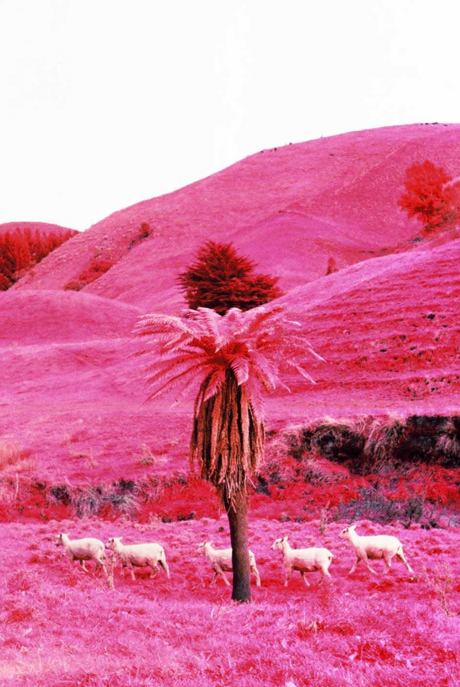 Infrared-New-Zealand-Kasia-Sykus-9.jpg