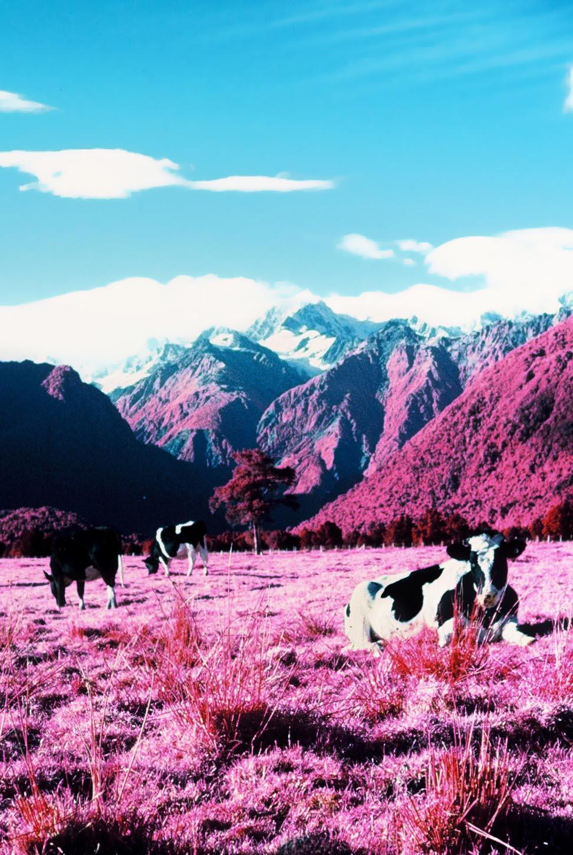 Infrared-New-Zealand-Kasia-Sykus-12.jpg