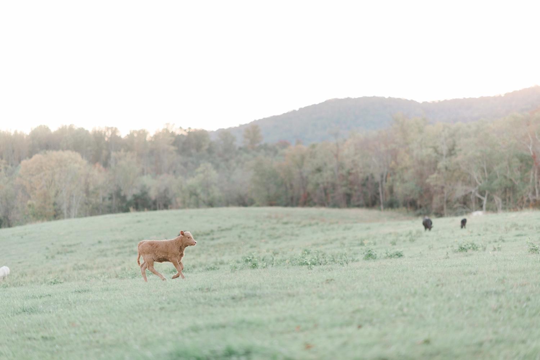 charlottesville_engagement_ashlawn_highland_0040.jpg