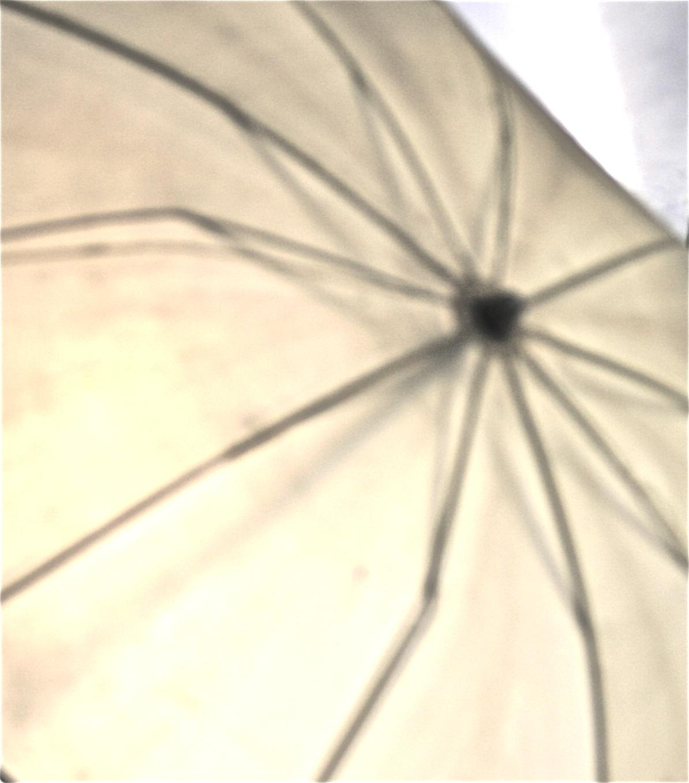 Umbrella and Hall Girls 036.jpg
