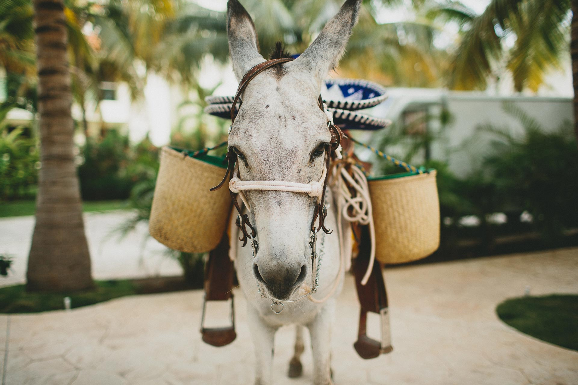 LC-Riviera-Maya-Mexico-Wedding-101@2x.jpg