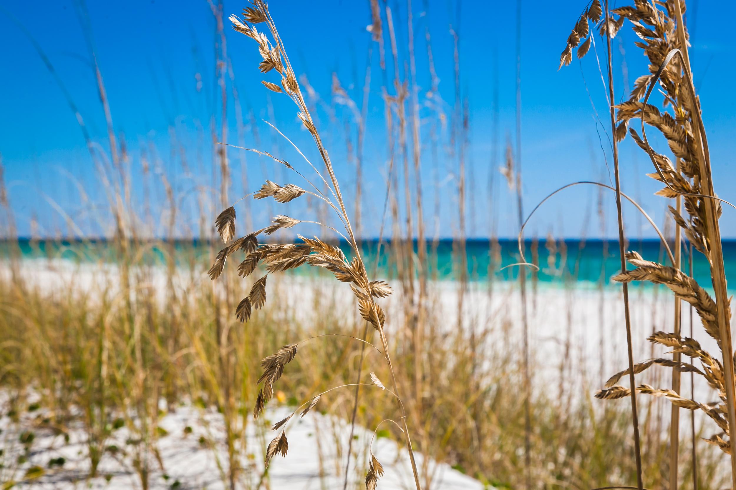 Destin Dunes and Sea Oats