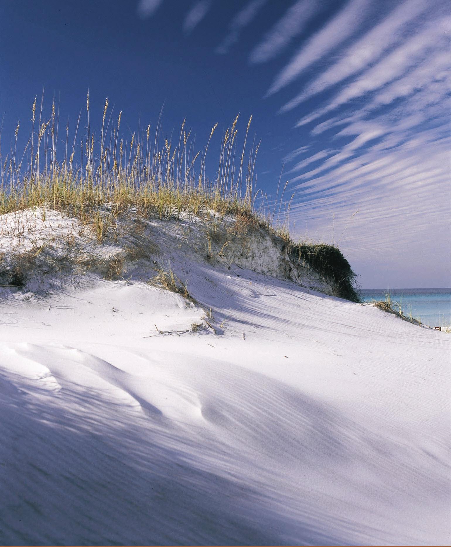 South Walton Sand Dunes