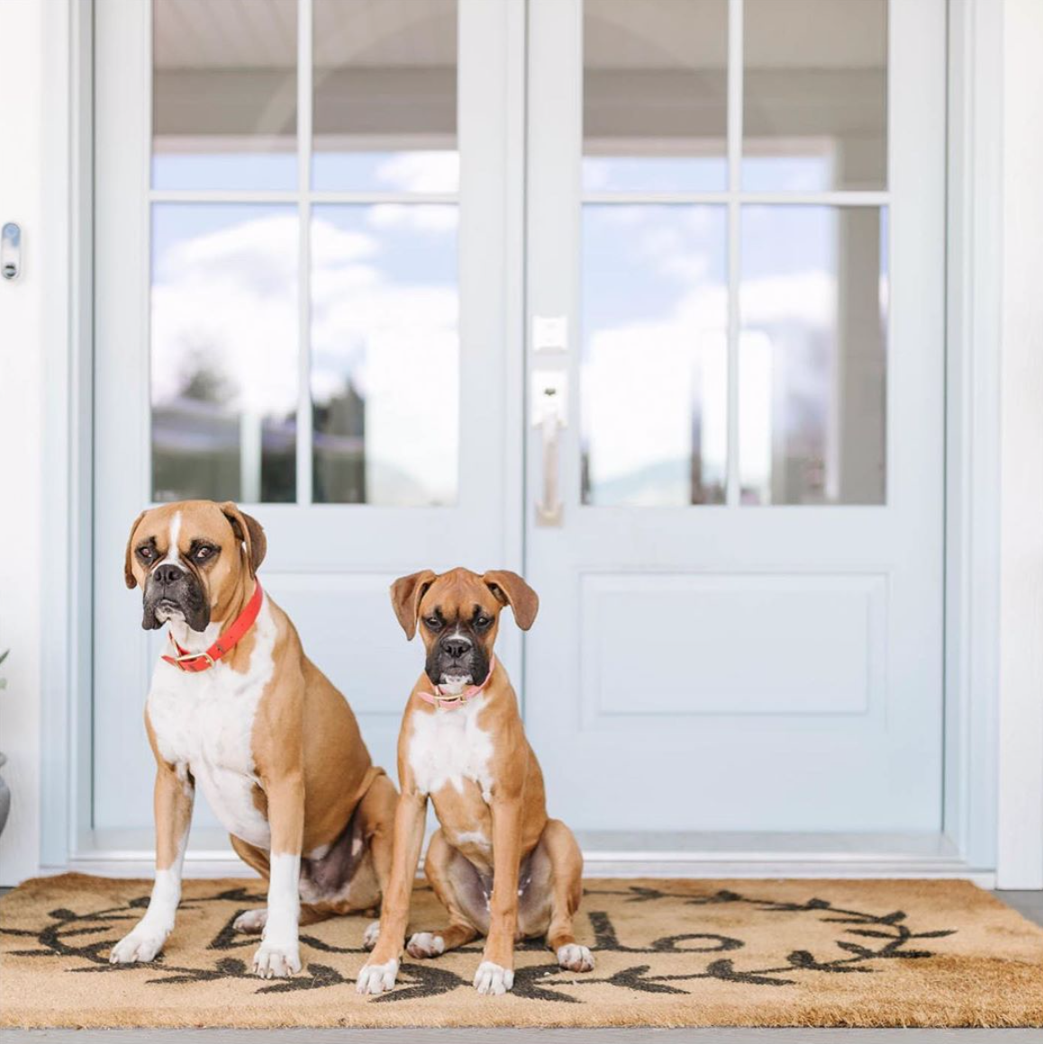 No guard dogs needed with an Emtek lock on your front door but Canadian designer and TV show host  @jillian.harris 's cute pooches make an awfully adorable greeting.