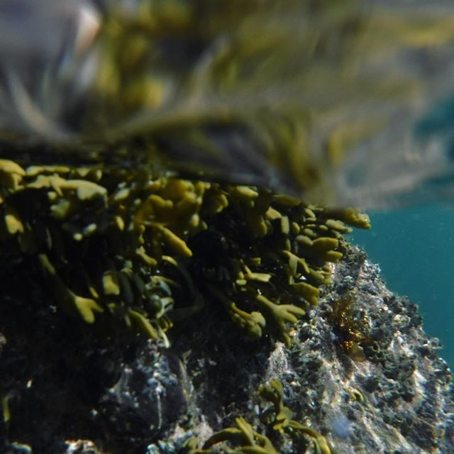 Ace swim today. Colour inspo... courtesy of the Firth of Forth 🌊 . . . #sharetheswimlove #openwaterswimming #swimminginscotland #handmadejewellery #jewelleryinspiration #colourinspiration #seaweed #underwater