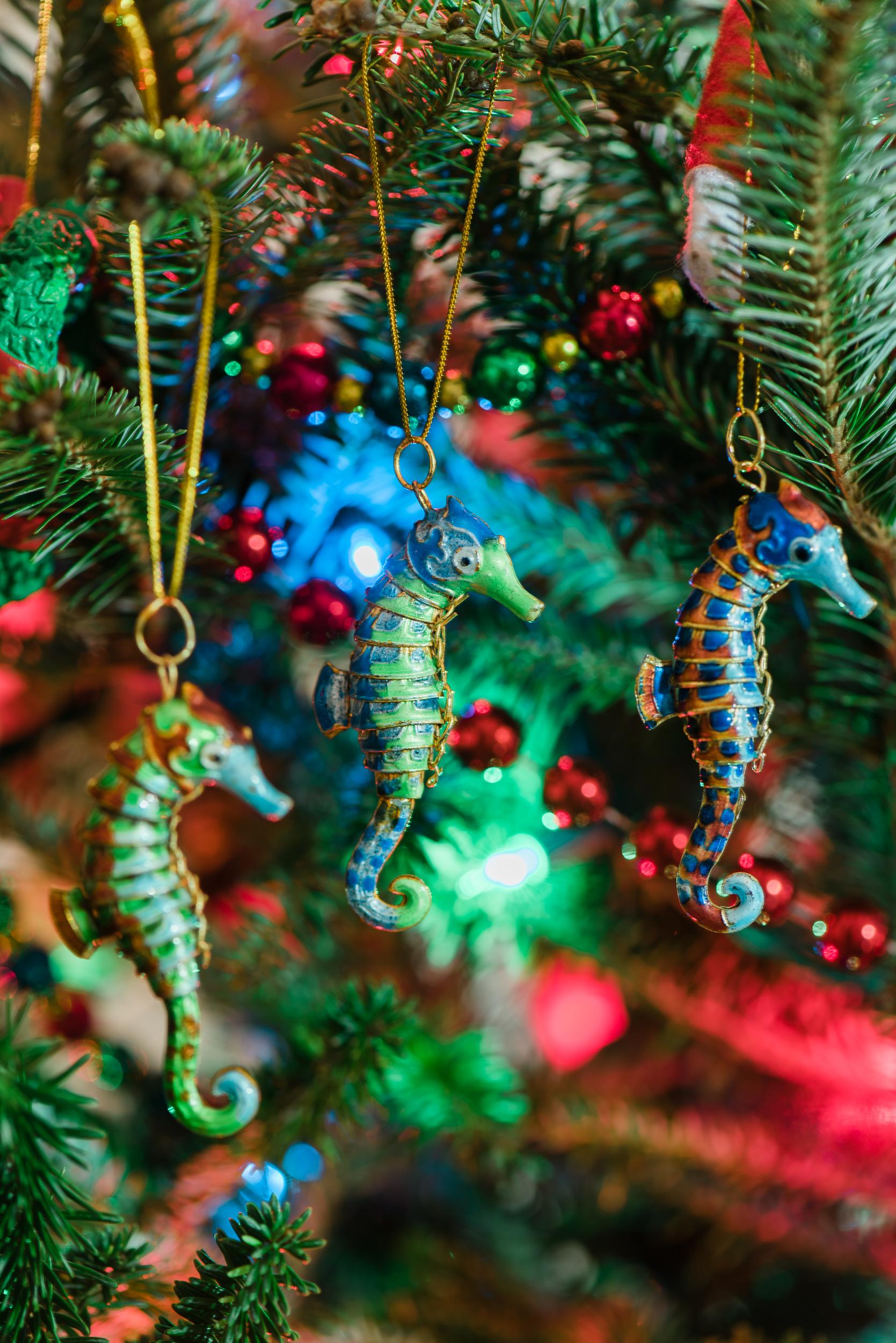 Seahorse-Christmas-Tree-Ornaments-Sarah-Danielle-Portraits-Florida-Photographer