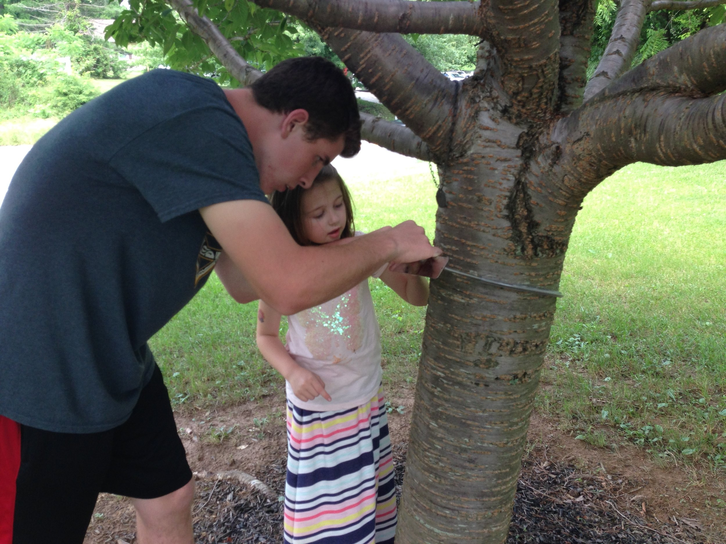 Placing a tree hugger on one of the Kwanzan cherry trees in Cedar Lane Park off of Route 108.