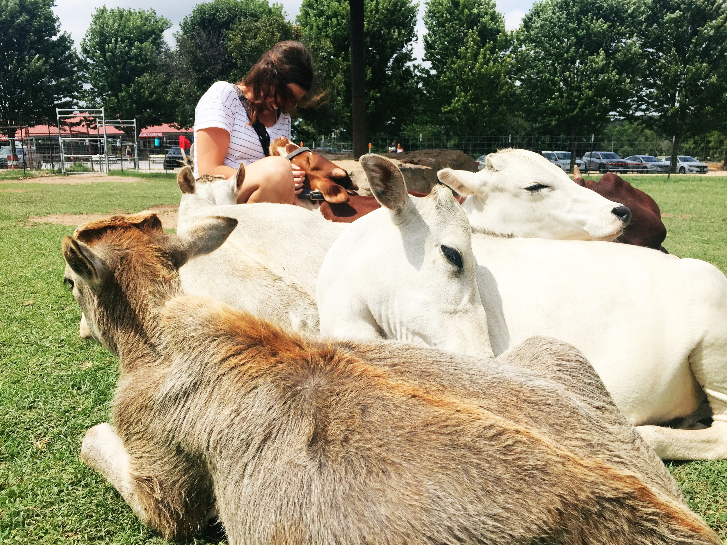 The little brown cow licked my arm...and it was a really weird feeling.