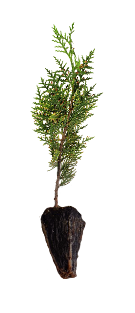 plant-plug.png
