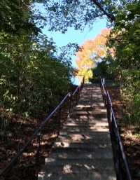 stairs in fall.jpg