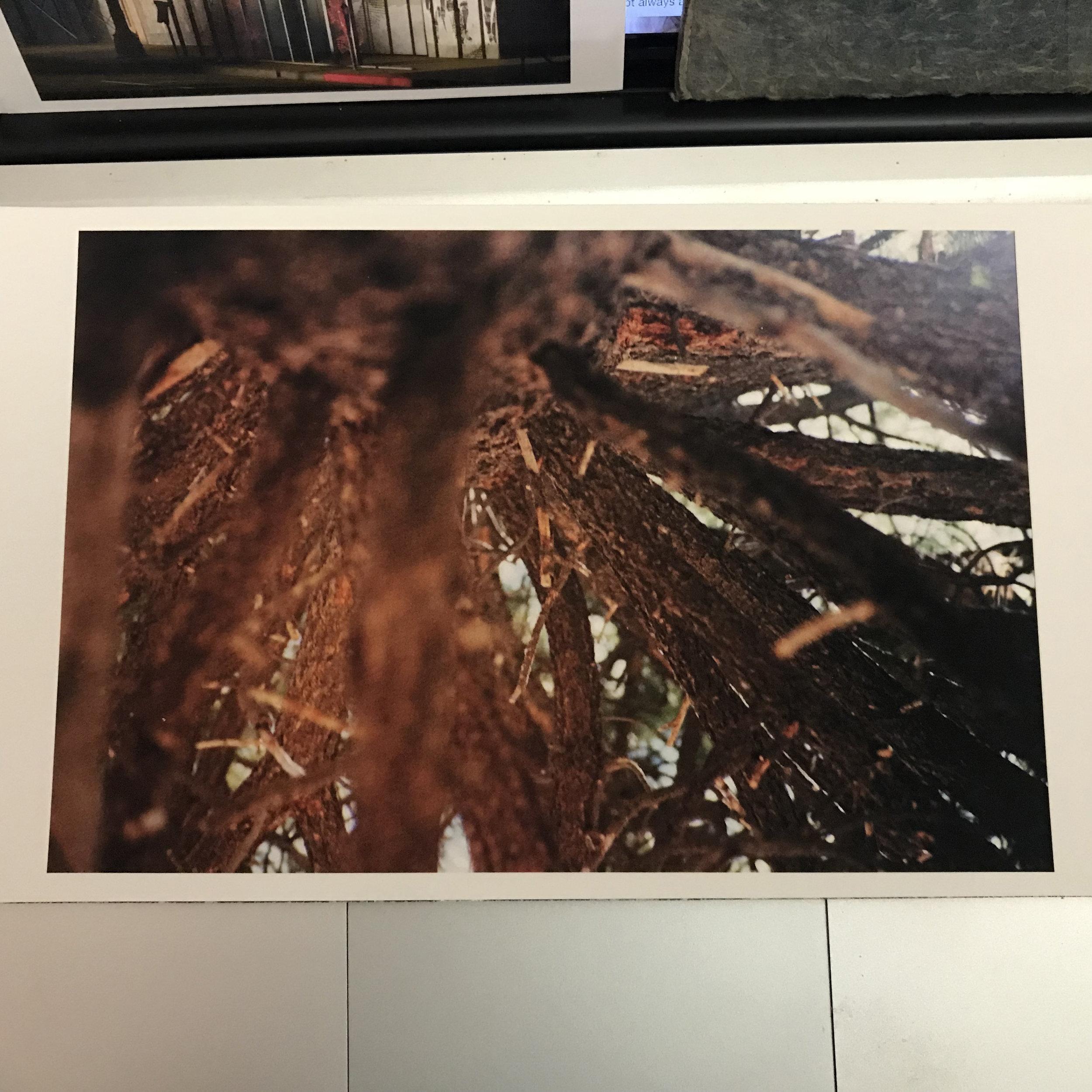 Kristina Simonsen Print Sale #_5064.jpg