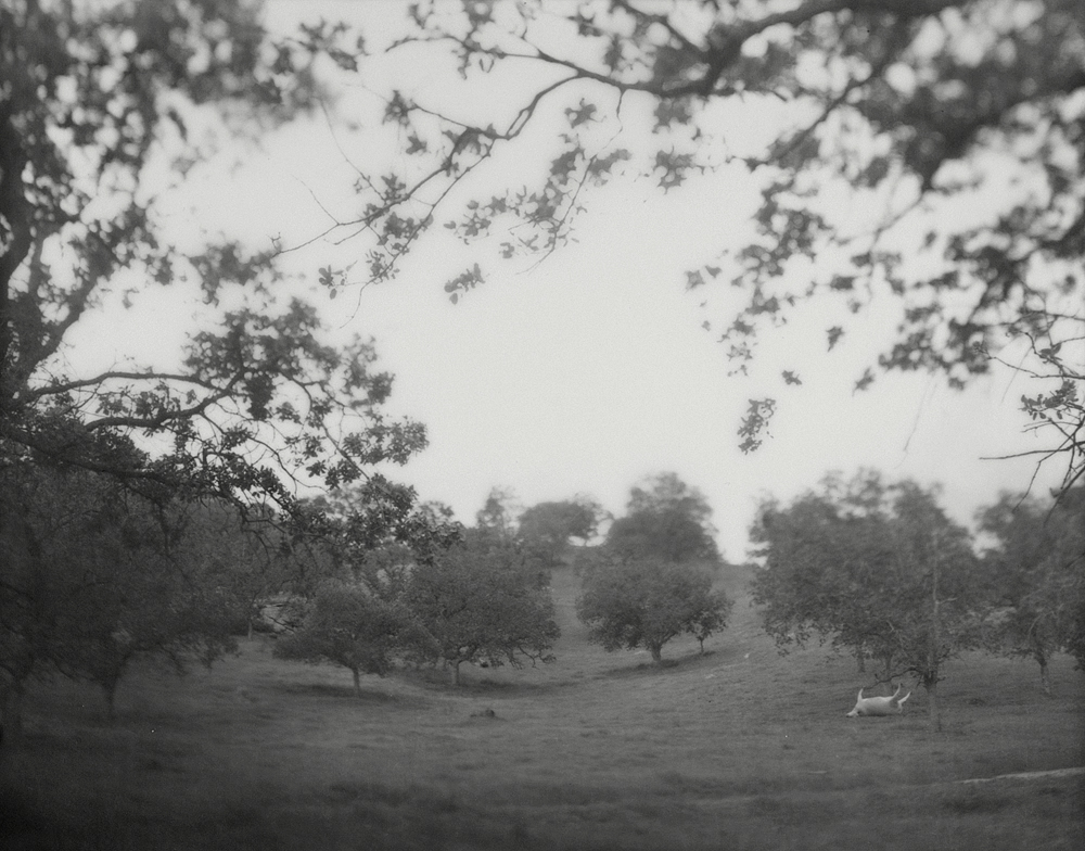 landscape_web_13.jpg