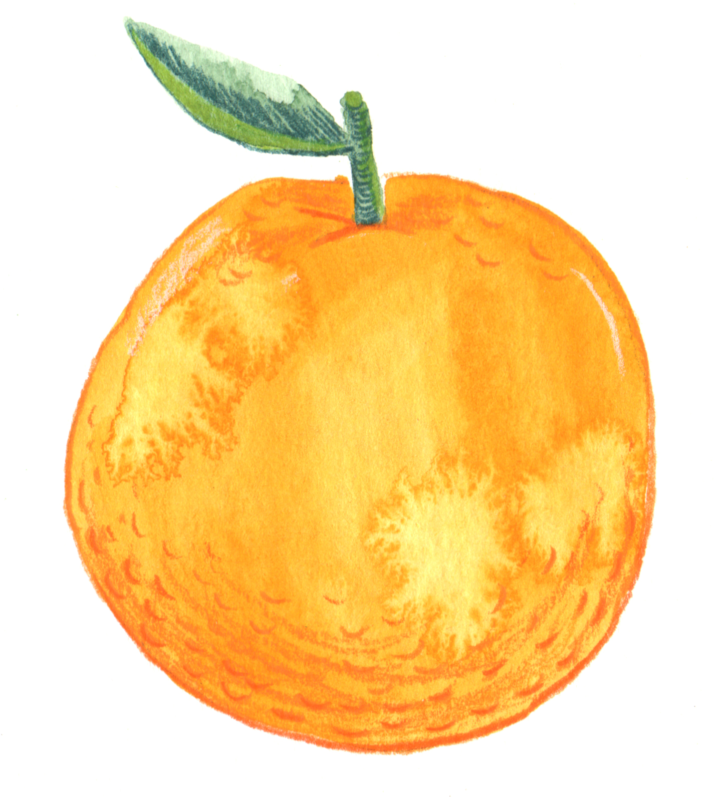 illustration fruitillustration anne quadflieg