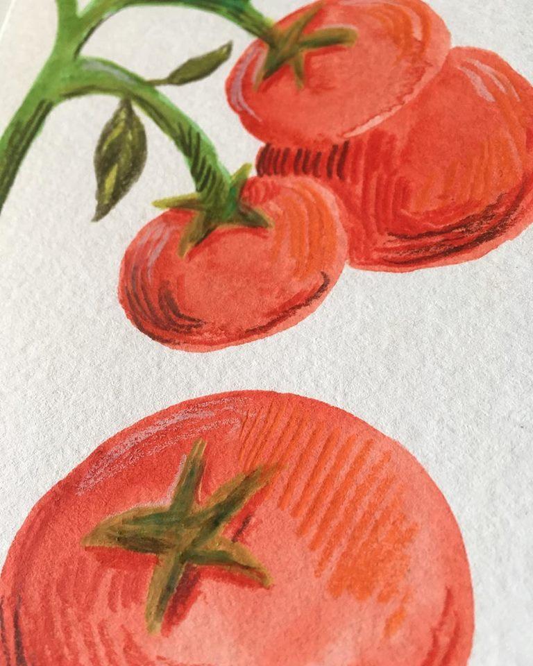 AnneQuadflieg_Wip_Illustration_tomatoes_tomaten.jpg