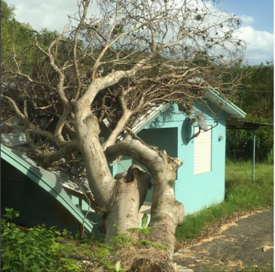 Commonly seen sights along roads all over the island