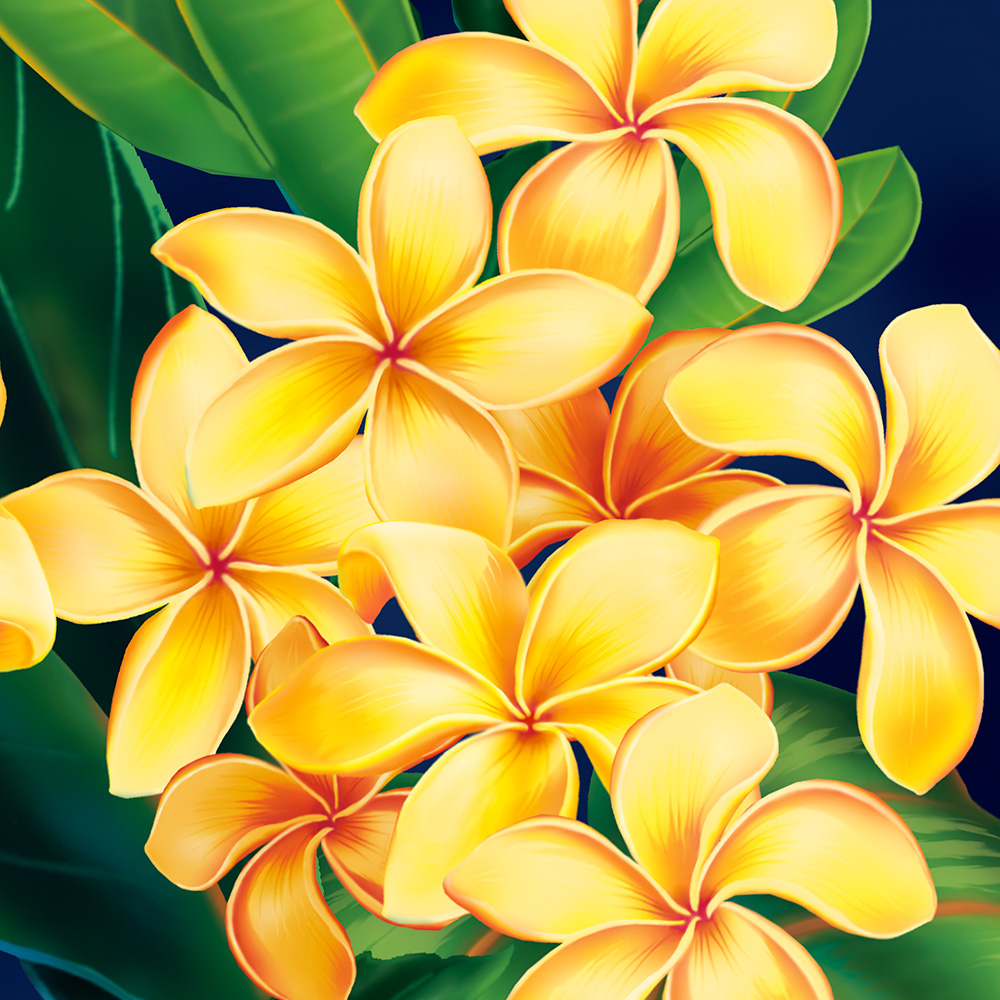 Tropical Paradise Plumeria Hawaiian Case