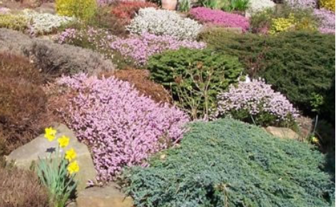 Whitby Town Council - have agreed to purchase the heathers, conifers, landscape membrane and bark mulch valued at £235