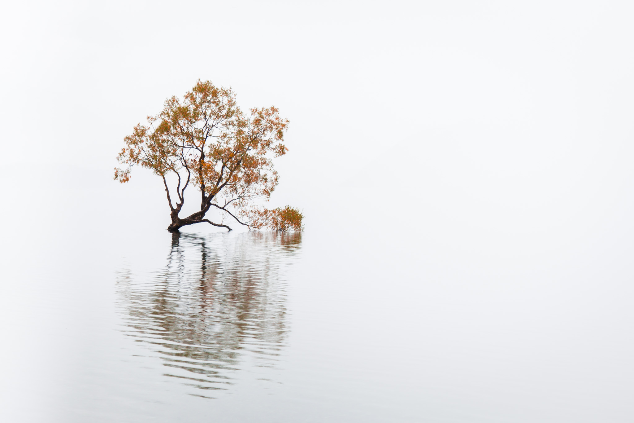 The Lone Tree of Wanaka