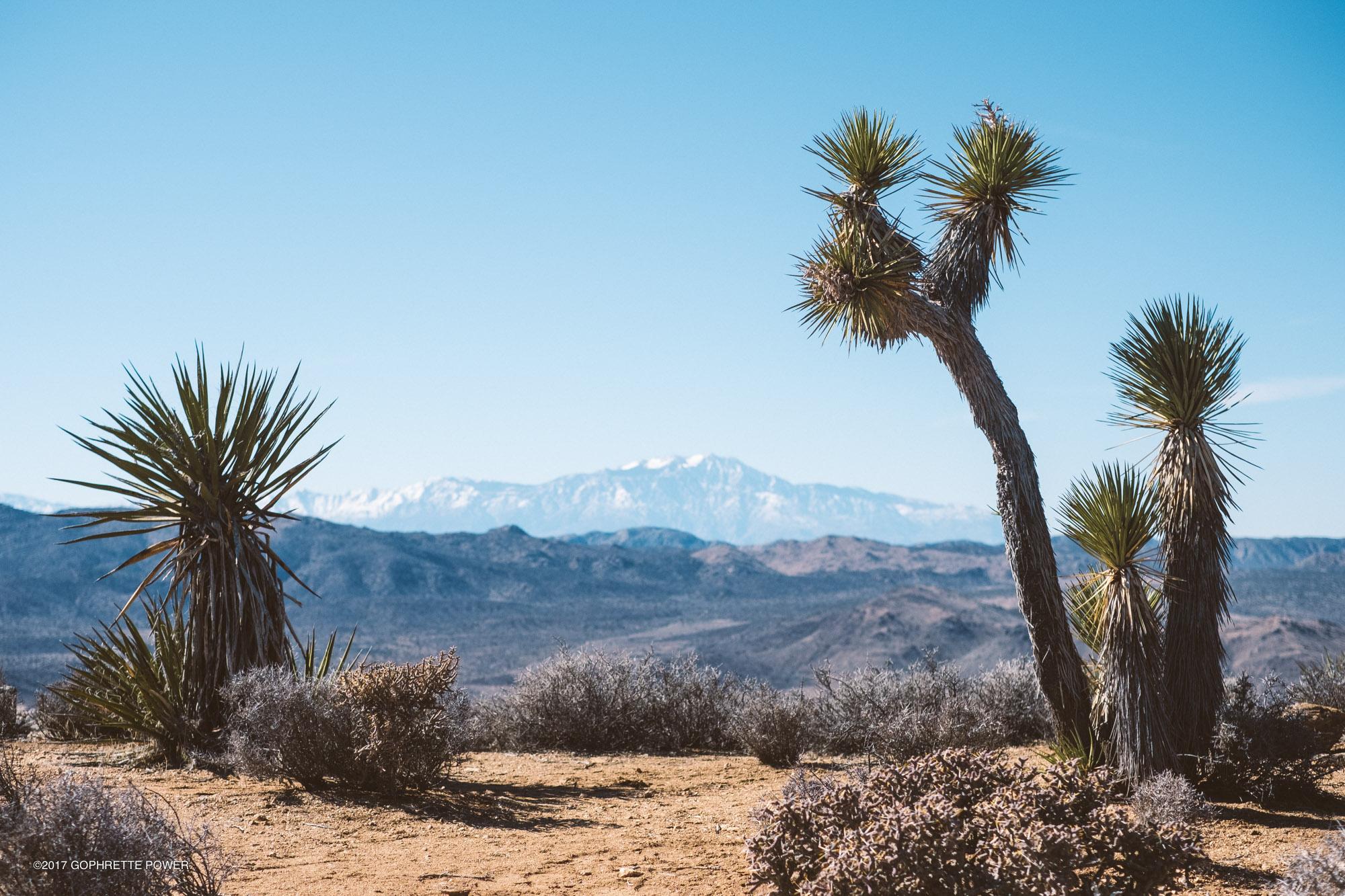 La vue au sommet de Ryan Mountain d'où l'on peut voir le Mont San Gorgonio.