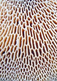 coral texture 2.jpg