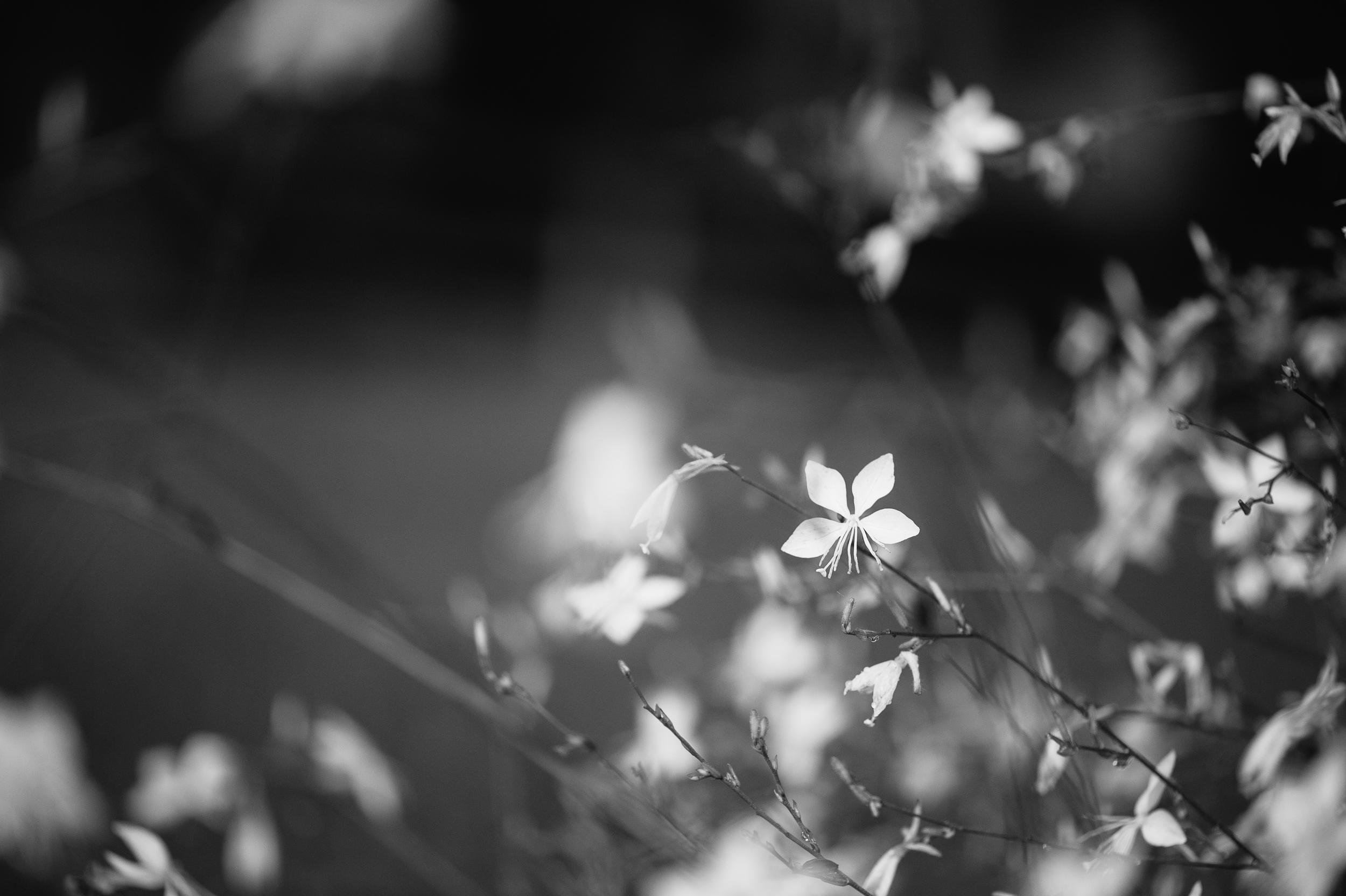 kelseygerhard-dream36.jpg