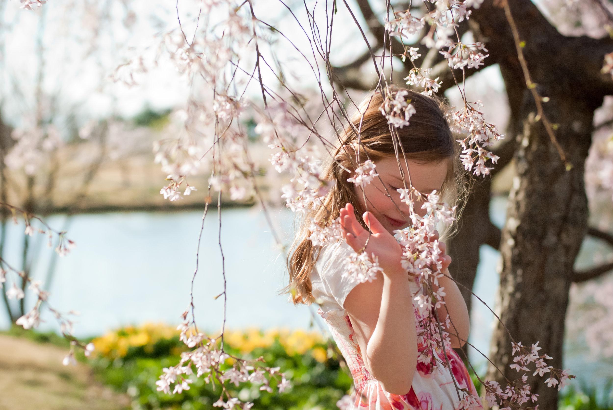 07-kgphoto.cherryblossoms2011-29.jpg