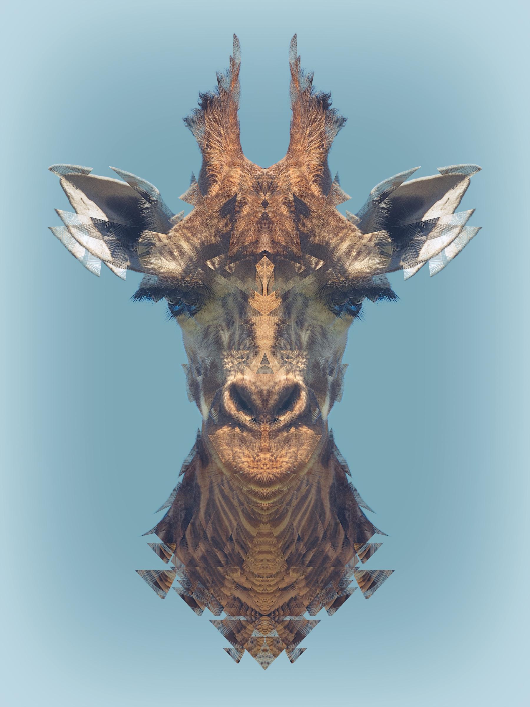 Animalia: Giraffe