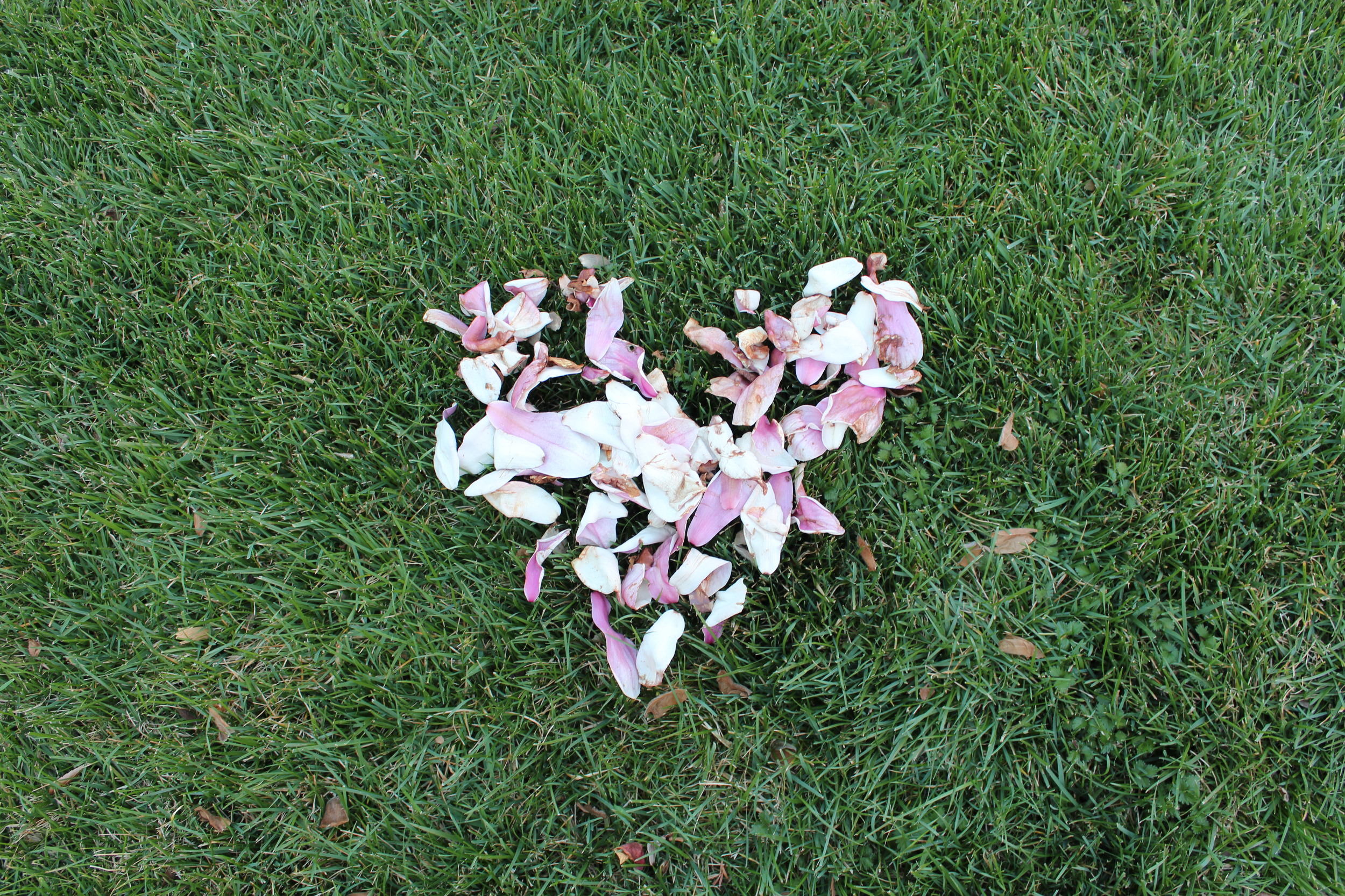 A heart in cherry blossom petals