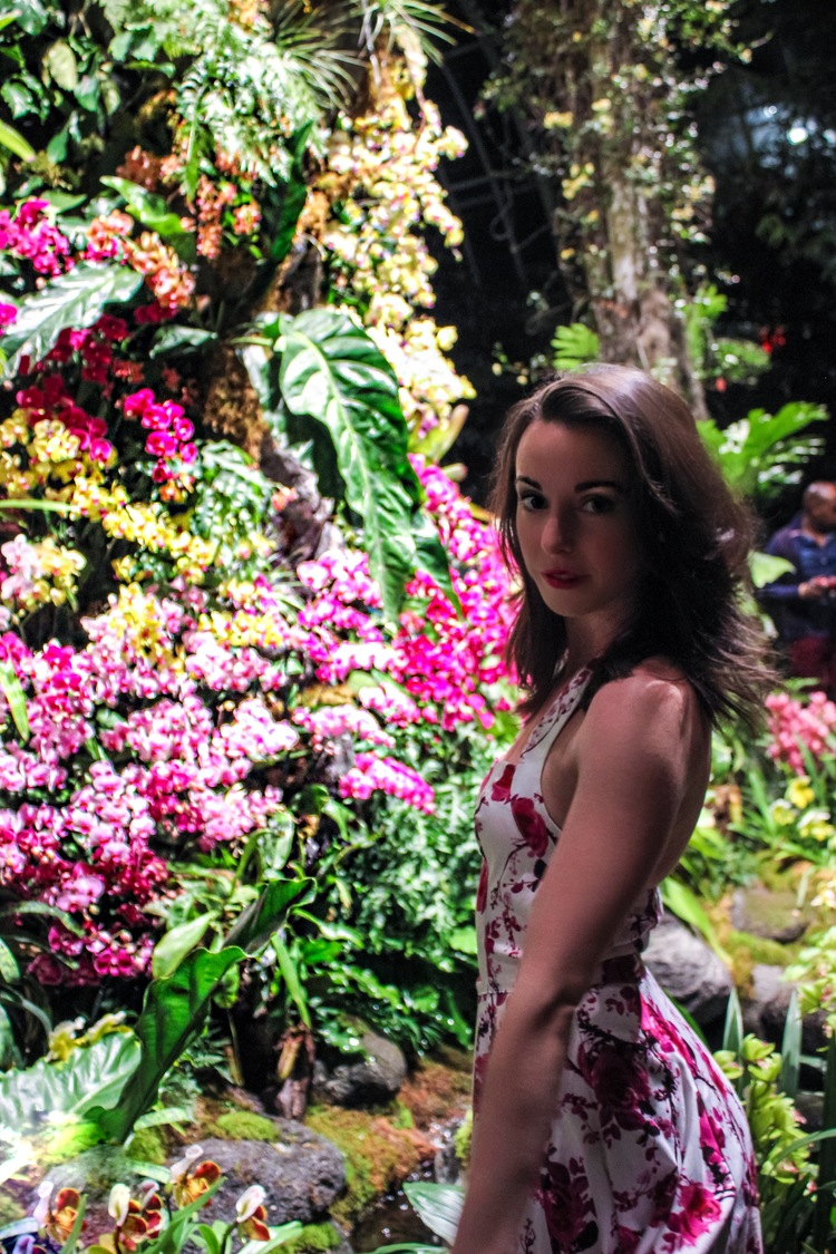 ORCHID EVENINGS AT THE NEW YORK BOTANICAL GARDENS - NOW THRU APRIL 16