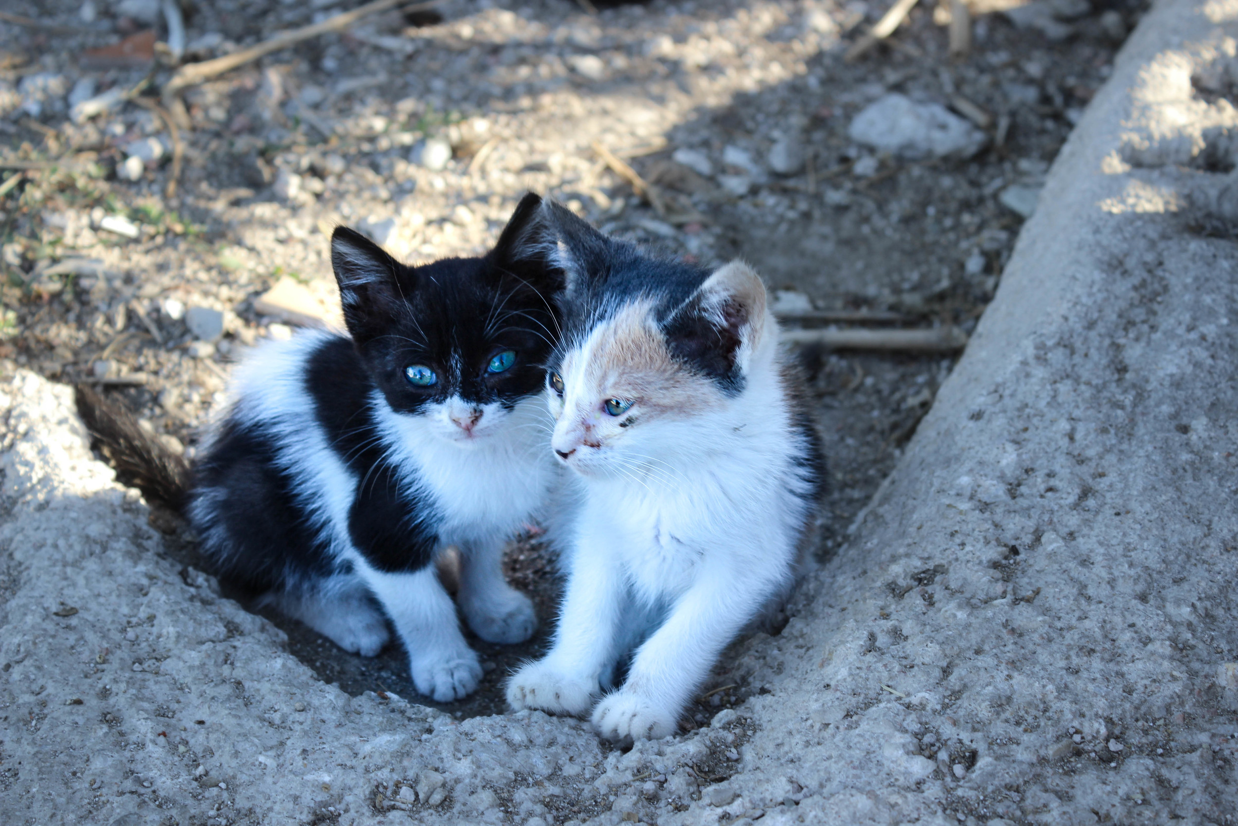 Found cute kitten's on our way to Kiki's as well!