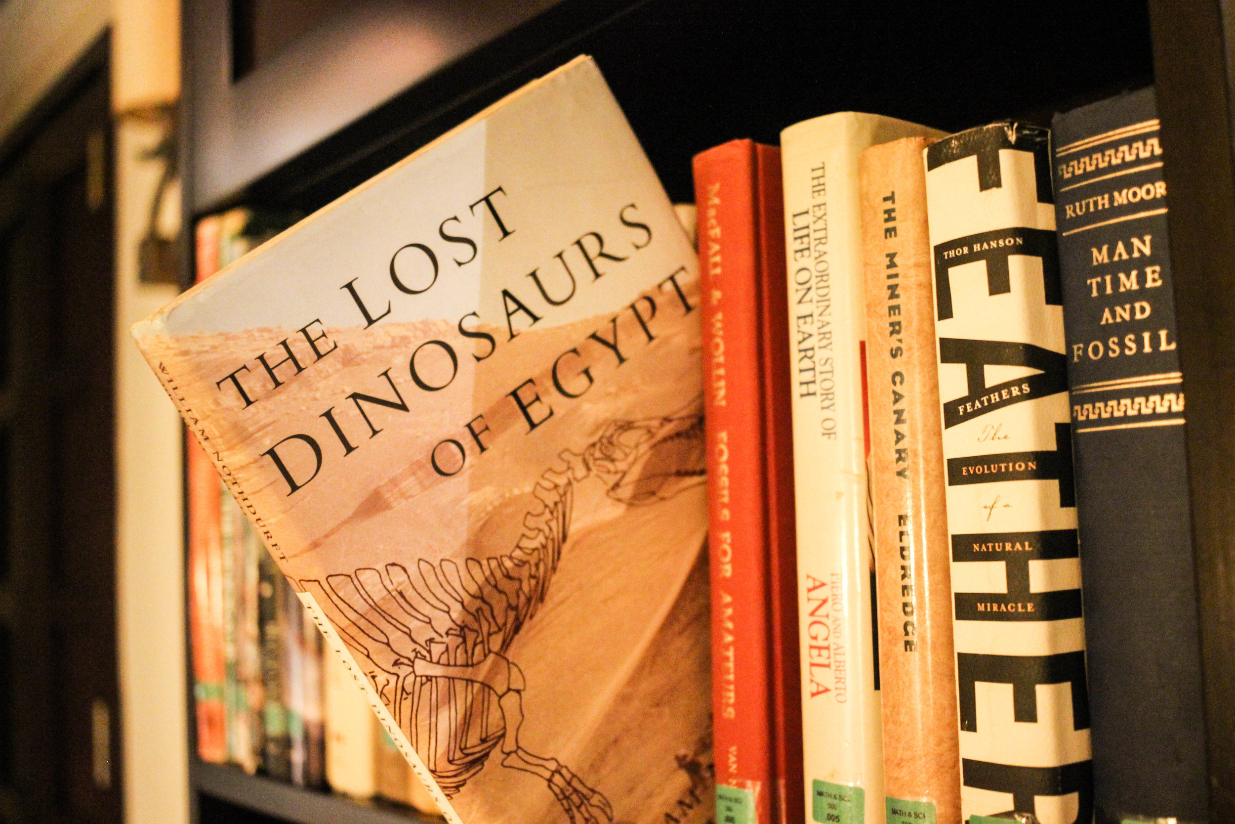 One of the many dinosaur themed books in the room.