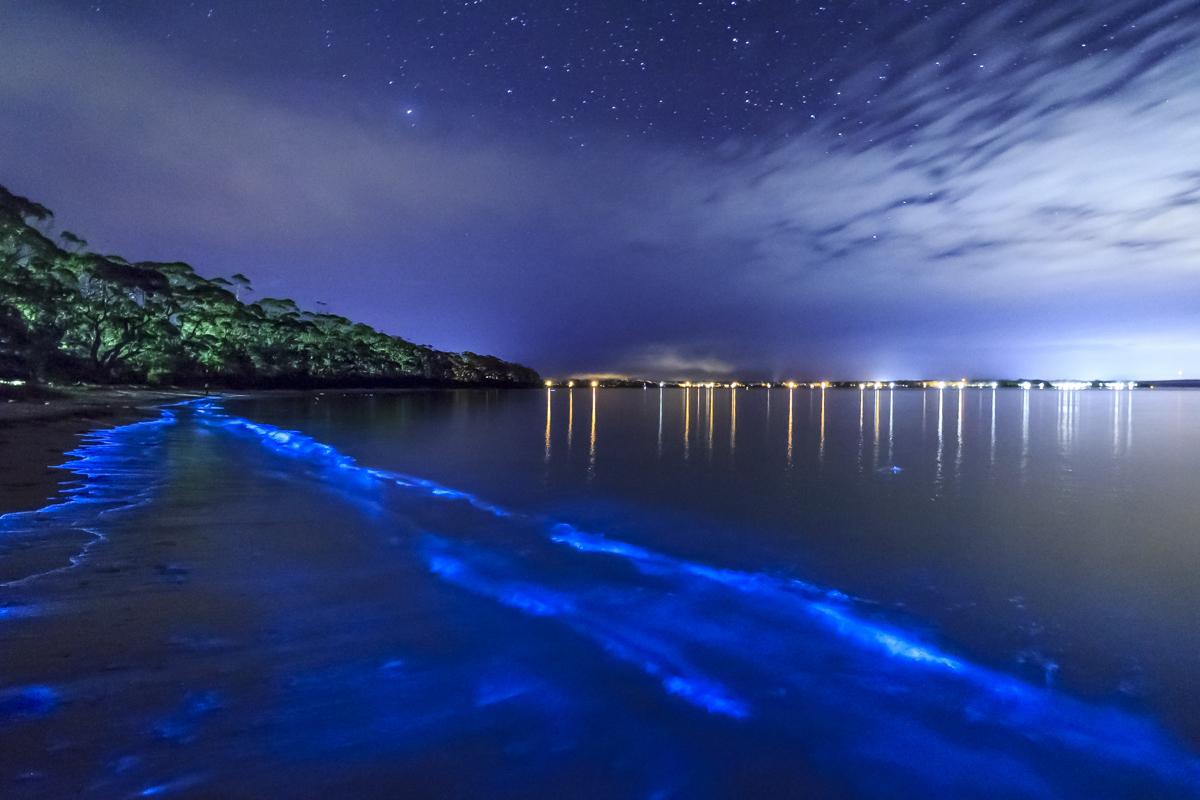 GLOWING BIO BAY   Vieques, Puerto Rico