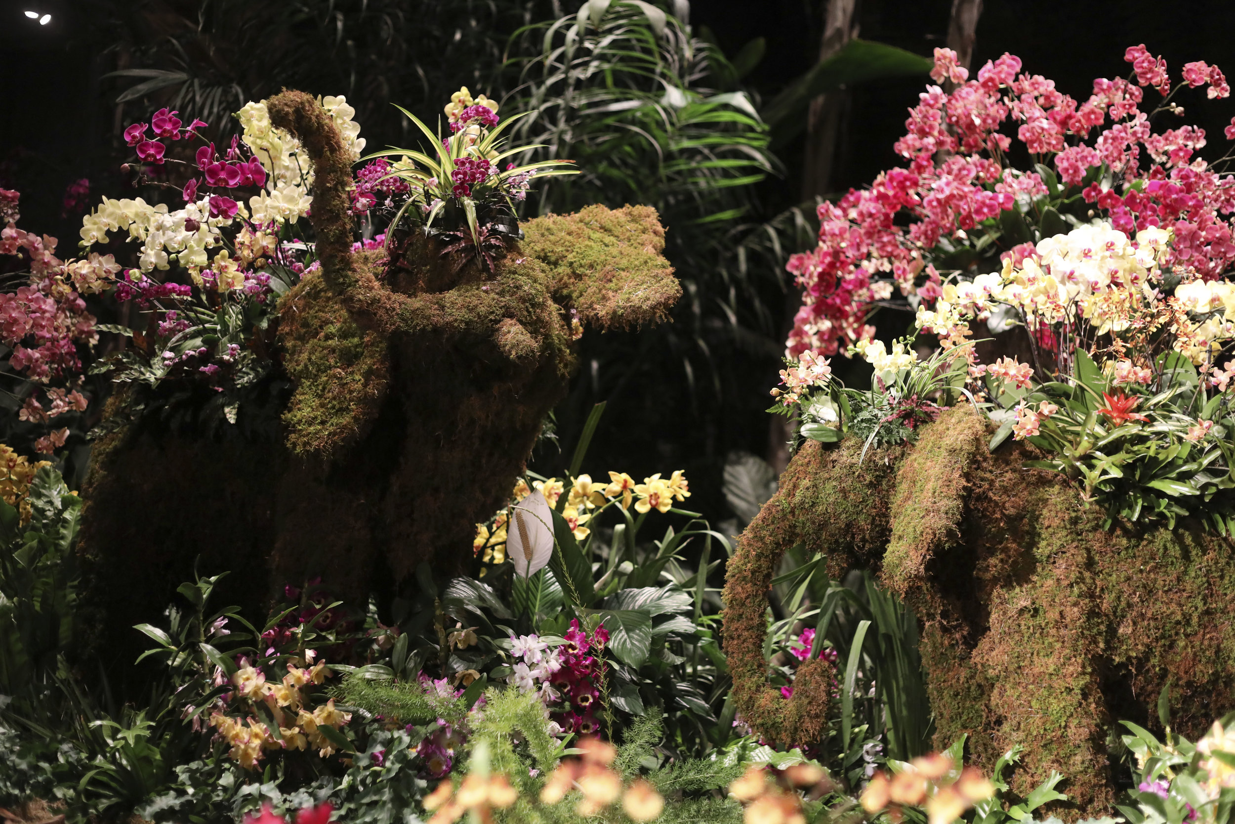 Thai elephants made with live plants.